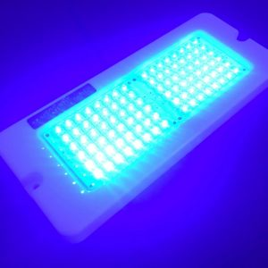 Marine Night Lights Oblong Blue Glowing LEDs